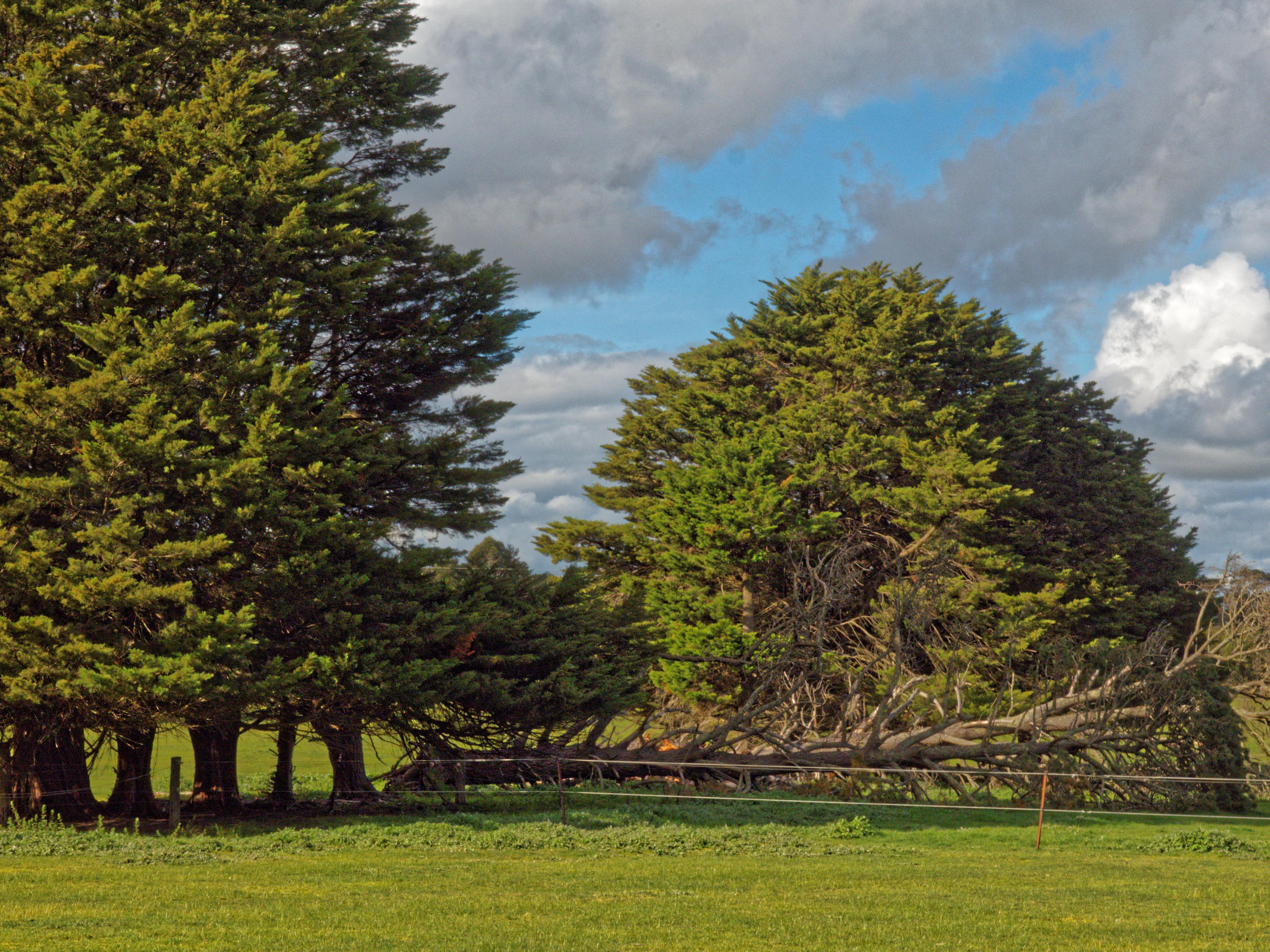 fallen-trees.jpeg