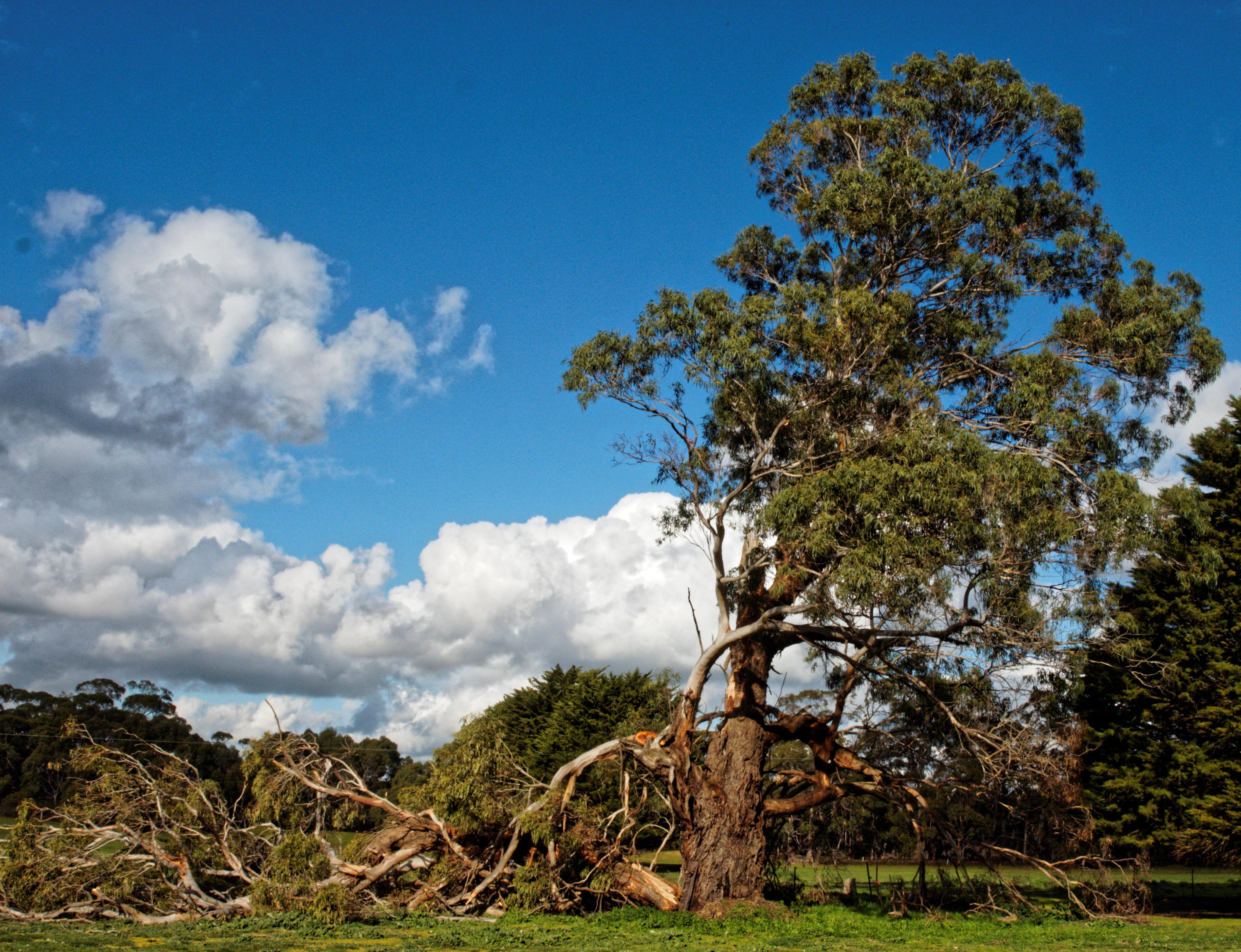 tree-with-broken-branch-4.jpeg