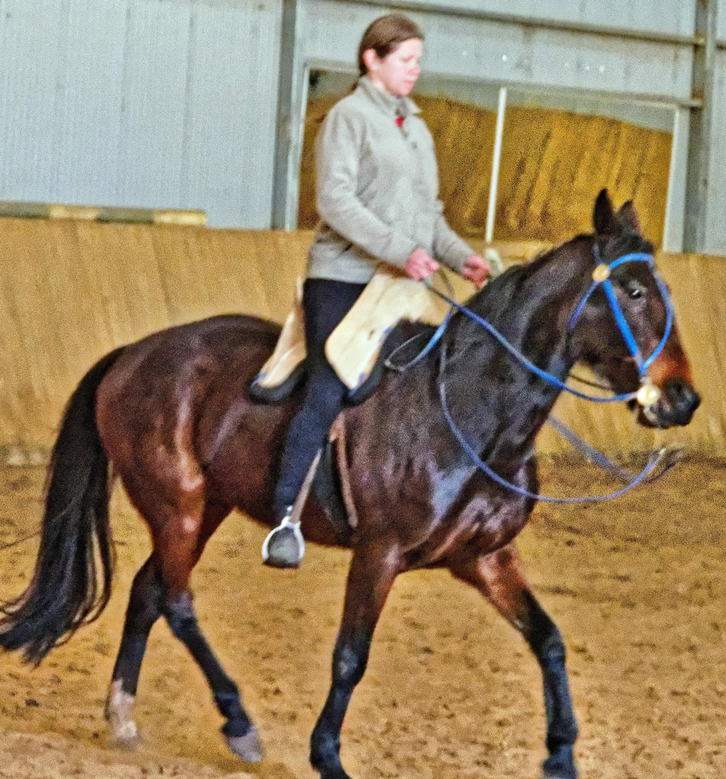 War-saddles-9.jpeg