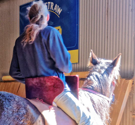 War-saddles-8.jpeg