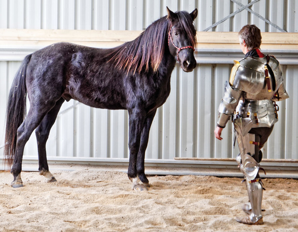 showing-armour-to-horses-13.jpeg