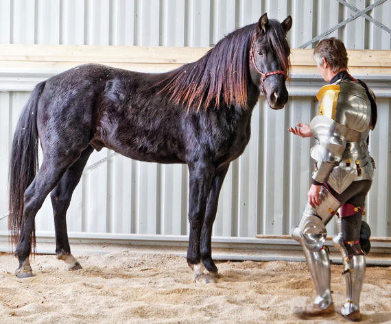 showing-armour-to-horses-14.jpeg