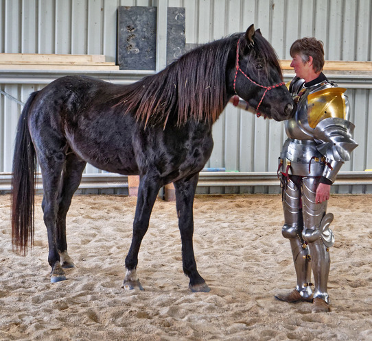 showing-armour-to-horses-17.jpeg