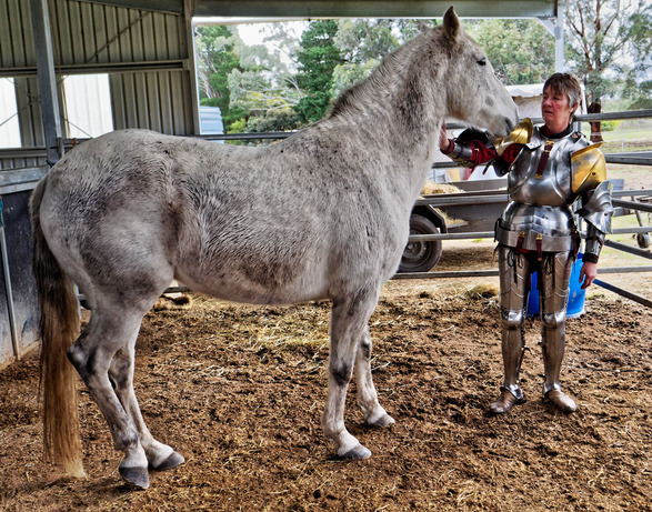 showing-armour-to-horses-6.jpeg