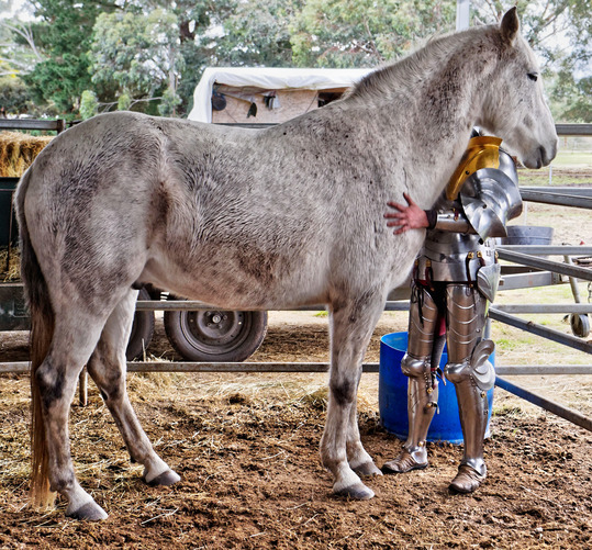 showing-armour-to-horses-8.jpeg