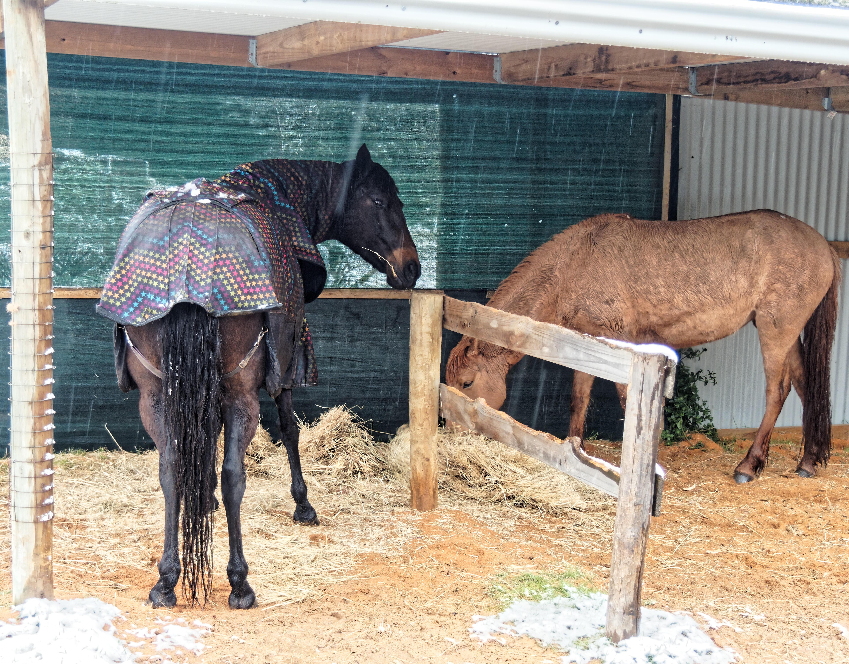 horses-2.jpeg