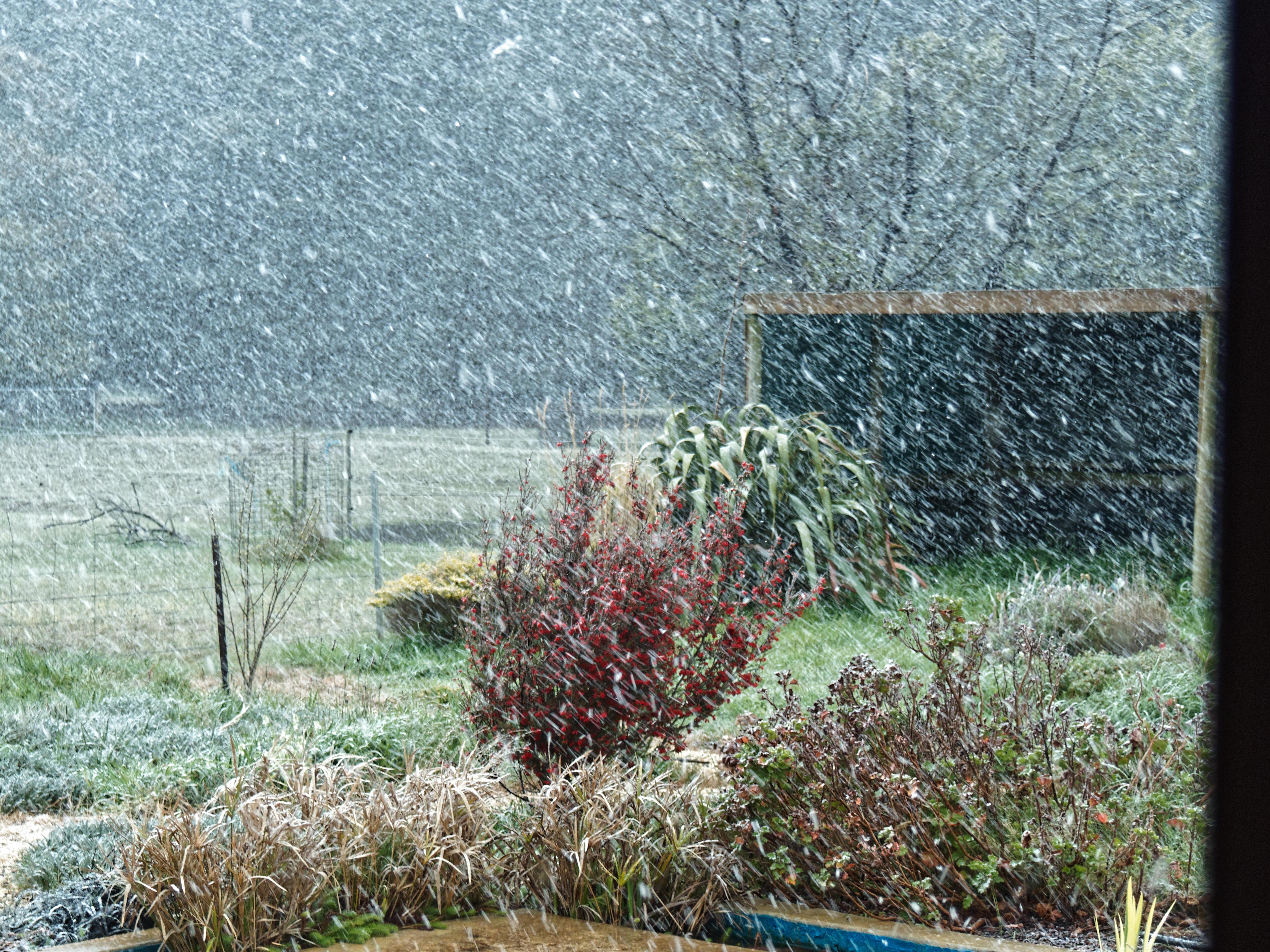 snow-4.jpeg