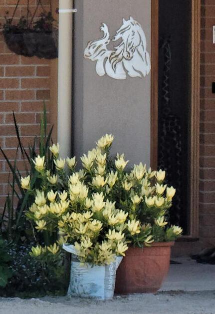 house-entrance.jpeg